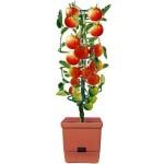 Tomaten Selber Zchten Balkon : ... Gewicht beisammen. Sie soll ja schließlich ordentlich Tomaten tragen