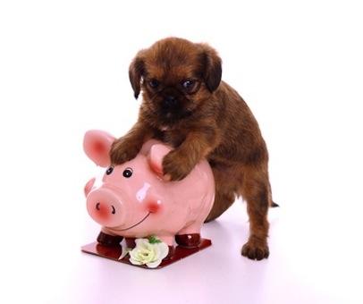 Welpe hält schüchtern Sparschwein