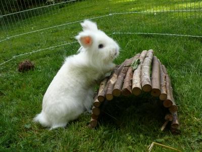 gl ckliche kaninchen urban farmer. Black Bedroom Furniture Sets. Home Design Ideas