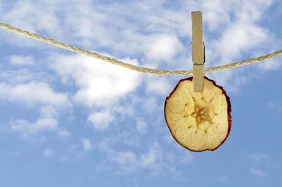 Apfelscheibe an Leine