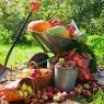 crop of vegetables in the garden