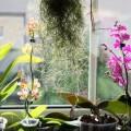 Lichtmangel bei Zimmerpflanzen