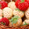 Ripe White and Red Strawberries in basket, on white background